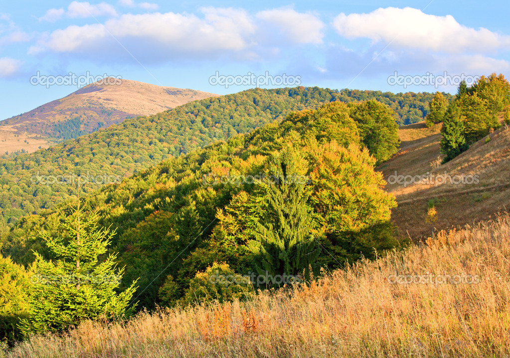 Autumn mountain hill with colorful tree (Carpathians, Ukraine) — Stock Photo #4578182