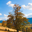 Bid autumn lonely tree  on mountainside — Stock Photo
