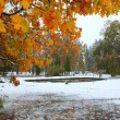 Park and first snow — Stock Photo