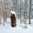 Stock Photo: Dull winter mountain forest