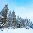 Winter fir trees — Stock Photo