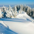 snowy landscape — Stock Photo #4584353