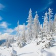 snowy landscape — Stock Photo #4584428