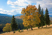 Autumn in mountain — Stock Photo