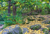 Autumn city park — Stock Photo