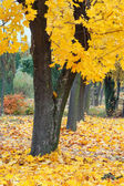 Yellow autumn park — Stock Photo