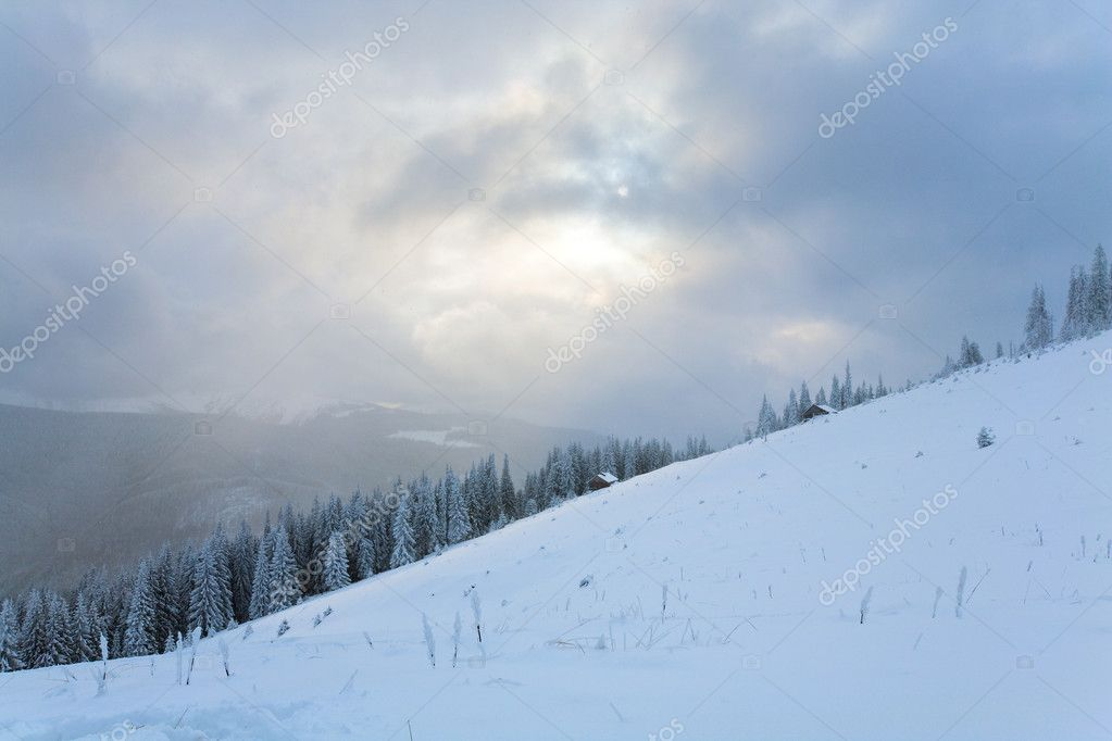 Winter evening  calm mountain landscape with fir trees  on slope (Kukol Mount, Carpathian Mountains, Ukraine) — Stock Photo #4584184