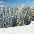 Winter mountain landscape (panorama) - Stock Photo