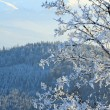 Rime covered trees in winter mountain — Stock Photo #4595293