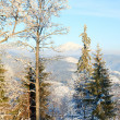 Rime covered trees in winter mountain — Stock Photo