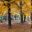 Autumn park — Stock Photo #4595550