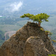 Tree on rocks top — Stock Photo #4600305