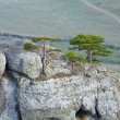 Foto Stock: Trees on rocks top