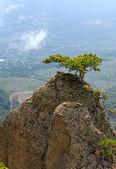 Tree on rocks top — Stock Photo