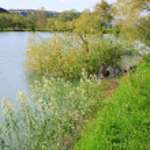 Beautiful spring lake — Stock Photo
