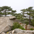Trees on rocks slope — Stock Photo
