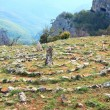 Stock Photo: Concentric stone circles on spring plateau