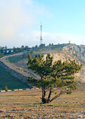 松の木 — ストック写真