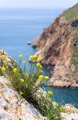 Sammer coast view — Stock Photo
