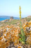 Pavilon na pobřeží moře — Stock fotografie