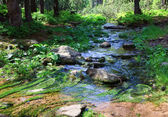 Stream in summer forest — Stock Photo