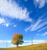 Lonely autumn tree on sky background. — Stock Photo