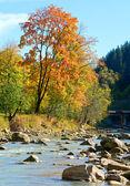 Autumn mountain stony river — Stock Photo