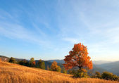 Lonely autumn tree on evening Carpathian mountainside. — Stock Photo