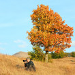 Stock Photo: Photographer on evening autumn Carpathian mountainside.