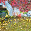 Small pond in autumn city park — ストック写真