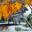 Park and first snow — Stock Photo #4660455