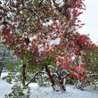 Park and first snow — Stock Photo #4660463