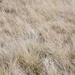 Stock Photo: November withered grass background