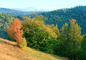 Autumn trees on Carpathian mountainside. — Stock Photo