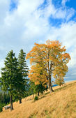 Lonely trees on autumn mountainside — Stock Photo