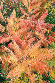 Red-yellow bush in autumn park — Stock Photo