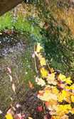 Small waterfall in autumn park — Stock Photo