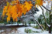 Park en eerste sneeuw — Stockfoto