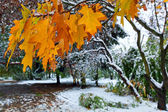 Parque y primeras nieves — Foto de Stock