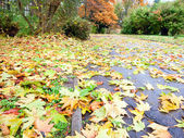 Autumn yellow abscissed leafs on park pathway — Stock Photo