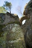 Albero sulla cima di rocce — Foto Stock