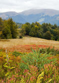 Autumn mountain road view — Stockfoto