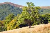 Tree in autumn mountain — Zdjęcie stockowe