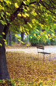 Bench in autumn park — Stock Photo