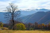 Bare tree in autumn mountain — Stock Photo