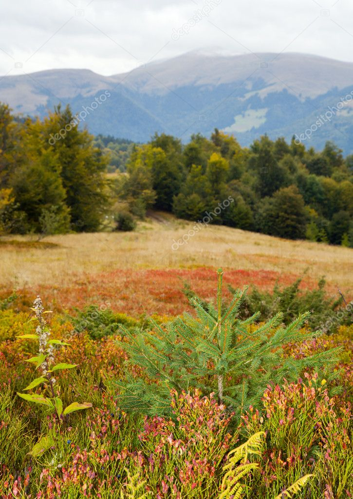 Carpathian Mountains (Ukraine) autumn landscape with whortleberry bushes — Stock Photo #4665380