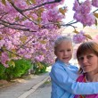 Pink japanese cherry blossom and happy family (portrait) — Stock Photo