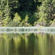 Summer mountain forest lake — Stock Photo #4687657