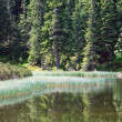 Summer mountain forest lake — Stock Photo #4687669