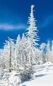 Snowy landscape — Foto Stock